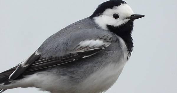 Van ERCİŞ Kasımbağı Çelebibağında kuşlar koruma altında