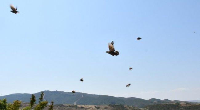 Tekirdağ'da 500 keklik doğaya salındı
