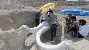 7,5 milyon yıllık fosili böyle taşıdılar