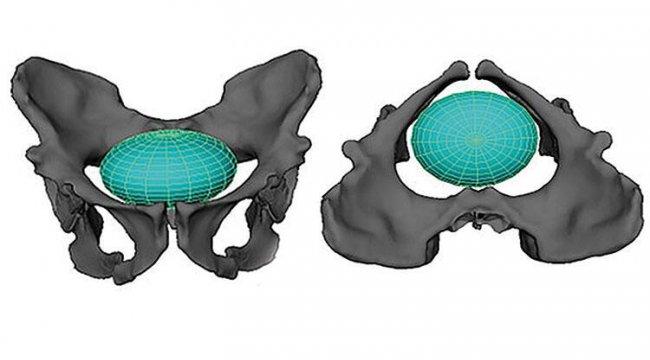 Antikçağda doğum yapmak! 2 milyon yıl önce yaşayan ve insana en yakın primat türü
