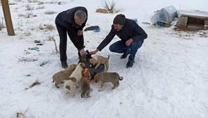 Van'da Sokak Hayvanlarının İhtiyaçları Gideriliyor