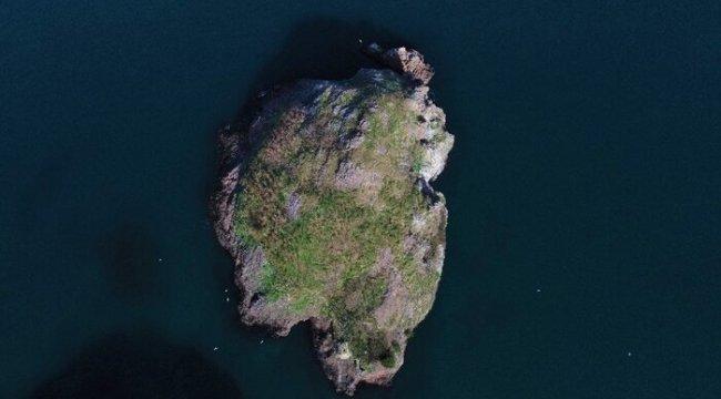 """Kuşların Ordu'daki yaşam alanı: """"Hoynat Adası"""""""