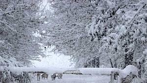 Van'da kar yağışı İranlı turistler için eğlence kaynağı oldu