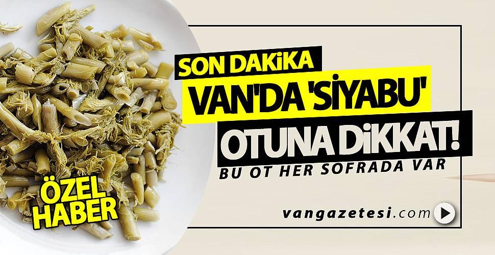 VAN'DA 'SİYABU' OTUNA DİKKAT!