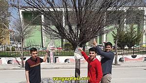 Kendi Eserlerini Ağaç Dallarına Poşetleri İle Astı Vanhaber