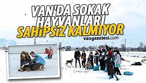 VAN'DA SOKAK HAYVANLARI SAHİPSİZ KALMIYOR - Van haber