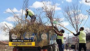Van'da Ağaç budama mevsimi geldi - İşte o ağaçlar böyle budandı