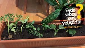 Van'da bahçe bitkilerine büyük rağbet! Evde sebze nasıl yetiştirilir?