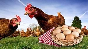 Van halkı tepkili! Tavuk fiyatına yumurta satılıyor…
