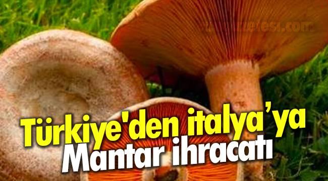 Türkiye'den İtalya ya Mantar İhracatı