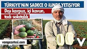 Türkiye'nin sadece bu ilinde yetişen şelengonun hasadına bu yıl erken başlandı