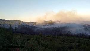 Antalya Manavgat'ta orman yangını! Ekiplerin çalışması sürüyor