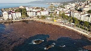 Denizin yüzeyi ağaçlar kaplandı - Giresun'da Sel felaketi