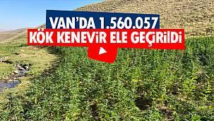 Van'da 1.560.057 kök kenevir ele geçirildi - İşte detaylar - Videolu