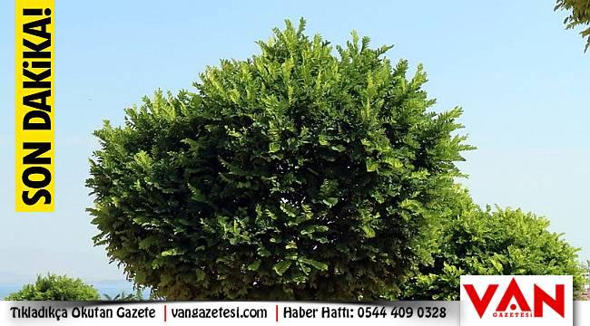 Van'da 21 bin ağaç dikimi yapıldı