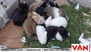 Van'da Tavşanları satarak, geçimini sağlıyor - Van'ın sır perdesi