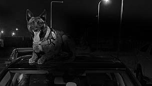 Van'ın Eminpaşa Mahallesine operasyon - Tavanda 10 kilo 225 gr eroin