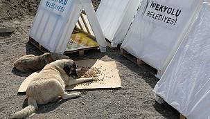Van'da Sokak Hayvanlarına Yeni Yuva