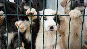 Kırklareli İl Hayvanları Koruma Kurulu Toplantısı