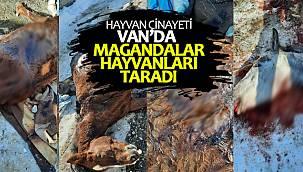 Van'da hayvan cinayeti - Van'da Magandalar hayvanları taradı