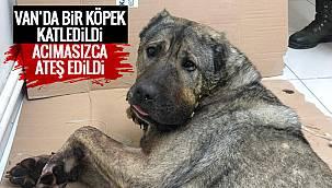 Van'da köpeği katlettiler - Ağzına tüfekle sıktılar