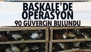 Başkale'de Operasyon- 90 Güvercin Bulundu