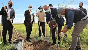 Tuşba'da 6 bin adet ceviz ve badem fidanı toprak ile buluşturuldu