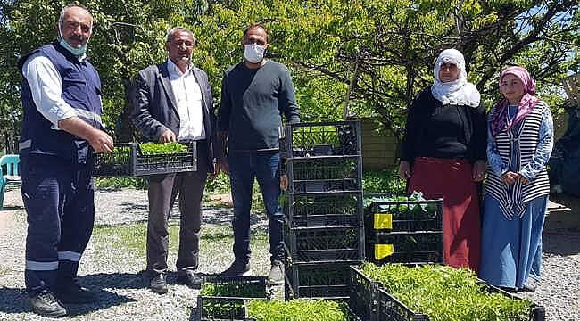Van'da 120 bin sebze fidesi dağıtımı, duyan kaptı