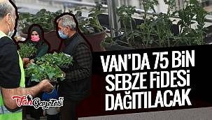 Van'da 75 bin sebze fidesi dağıtılacak