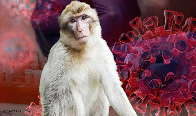 Korona bitmeden yeni bir virüs türü daha ortaya çıktı