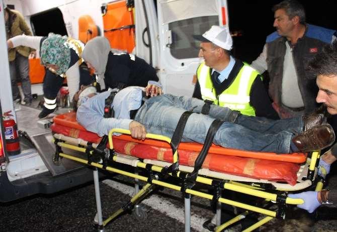 Domuz Sürüsü Facia Getirdi: 3 Ölü, 2 Yaralı