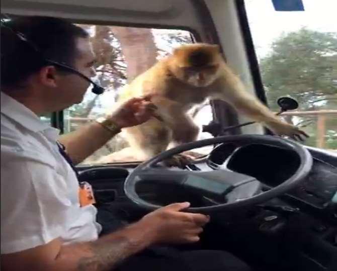 Maymun Usta Hırsızlara Taş Çıkarttı !