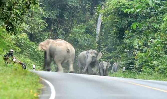 Öfkeli Filler Motosiklete Karşı