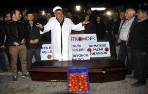 Antalyalı çiftçi domatesin cenaze namazını kıldı!
