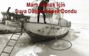 Van'da Suya Düşen Köpek Donarak Öldü